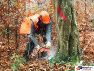 Curs Lucrător în silvicultură